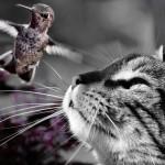 """Loví vaše kočka ptáky? Pořiďte jí """"bryndák"""""""