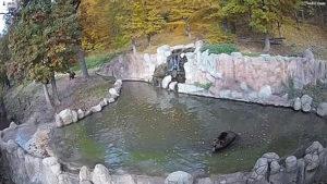livecam-brno-medvedi