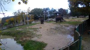 livecam-usti-sloni
