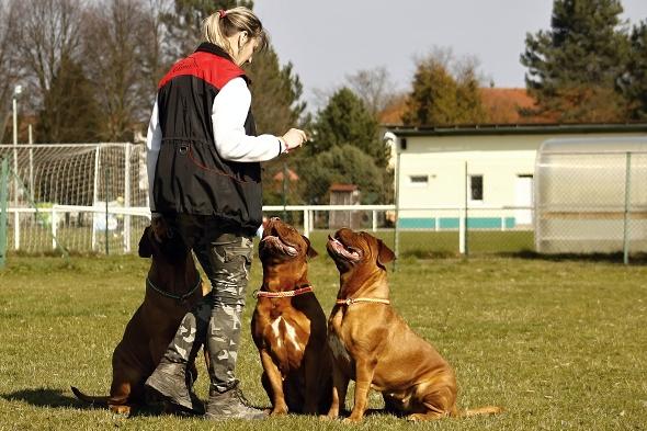 trénink psů