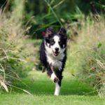 Spolehlivé přivolání – základ ovladatelnosti psa (2)