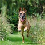 Spolehlivé přivolání – základ ovladatelnosti psa (1)