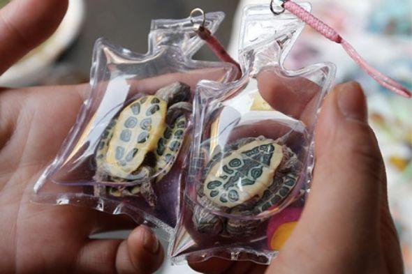 klíčenka želva