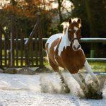 Jak zastavit splašeného koně (2. díl)