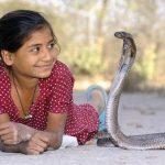Nové sérum zabírá proti uštknutí 18 druhů hadů