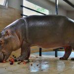 Hroch Buborek – nová hvězda Zoo Dvorec