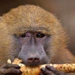 FOTO: Jarní Zoo Dvorec