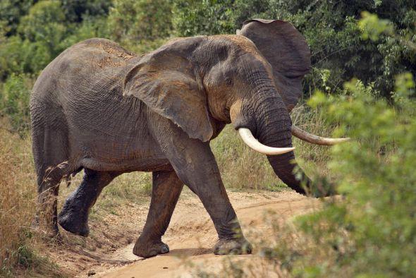 sloni, drony a včely