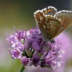 Motýlárium Votice se otevírá veřejnosti!