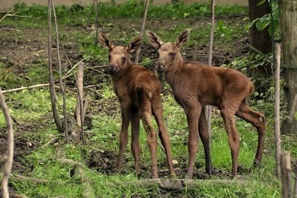 Dvojčata, zatím neznámého pohlaví, dělají radost malým i dospělým. | Kredit: © Michaela Jerhotová, Zoo Hluboká
