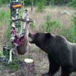 VIDEO: Medvěd si poradil s elektrickým proudem