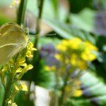 Na návštěvě v motýláriu – 2. část