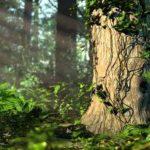 VIDEO: Příroda promlouvá