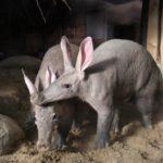 Novinky v zoo: námluvy, zoborožci nebo nyala