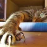 Jak naučit kočku na škrabadlo