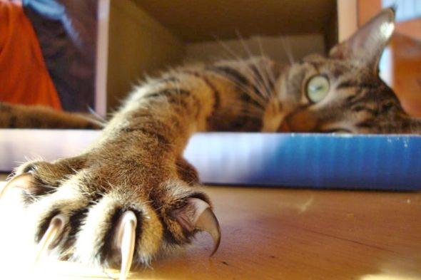 kočka s drápy