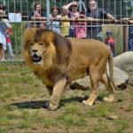 Novinky v zoo: tapír, banánovec a trnuchy
