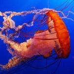 Jak se bránit medúzám?