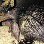 Nové zvířecí druhy v Zoo Dvůr Králové