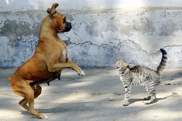 Nedorozumění mezi psem a kočkou? Možná jen kvůli ocasu. Kredit: Peterz Partensky, Flickr.com – CC BY-SA 2.0