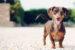 Ocas je pro psa prostředkem k vyjádření aktuálních emocí. | Kredit: Allen Skyy, Flickr.com – CC BY 2.0