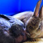 Králík Bunny a holoubek Pidg – přátelé ze sirotčince