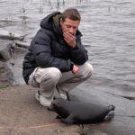 VIDEO: Uzdravený tuleň se po vypuštění vrátil k lidem