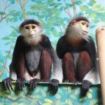 Novinky v zoo: nejen za vzácnými přírůstky