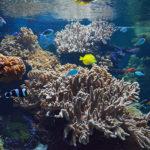 Za krásami Rajských ostrovů – 1. díl