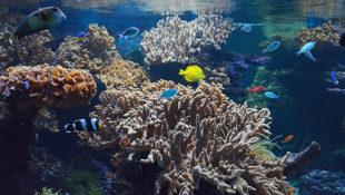 Při návštěvě přízemní expozice si možná budete připadat, jako byste opravdu nahlíželi skrz lodní okna do podmořského světa...  Kredit: © Redakce ZOO Magazín