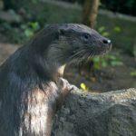 Zoo Děčín láká na vydry říční