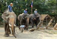 jízda na slonech