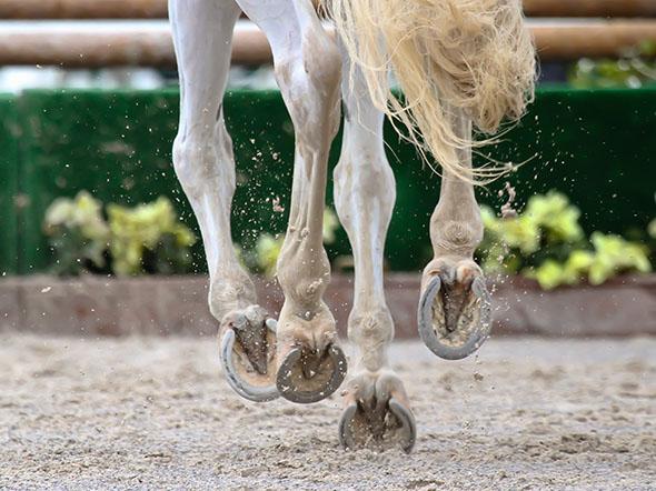 kopyta koně