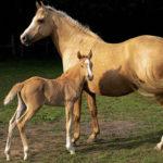 Kolik stojí kůň? – 1. část