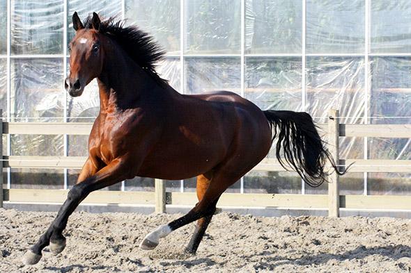kůň ve výběhu