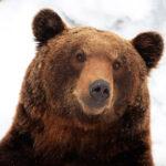 Medvědi (o sobě) v zimě nevědí