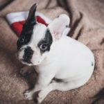 Dokáže pes cítit lidský strach?