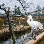 Ptačí mokřady – klidný koutek v přeplněné zoo