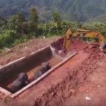 VIDEO: Sloni uvízli ve vodní nádrži