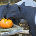 Novinky v zoo: Podzimní přírůstky a akce