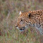 Populace volně žijících zvířat dramaticky klesají