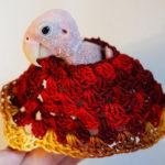Papoušek přišel o peří, životní elán ale neztratil