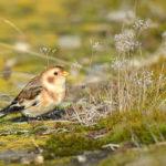 Vzácní ptačí hosté se objevili na jižní Moravě
