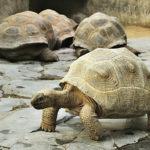 Novinky v zoo: želvy, korovci a jiní příchozí