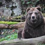 U medvědů grizzly v Děčíně – 2. díl