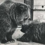 U medvědů grizzly v Děčíně – 1. díl