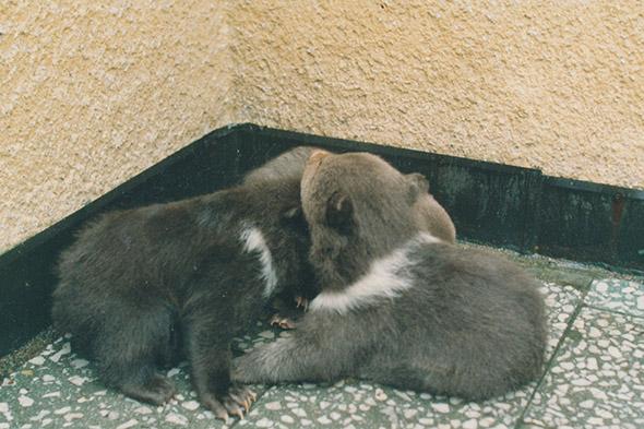 medvíďata zoo Děčín