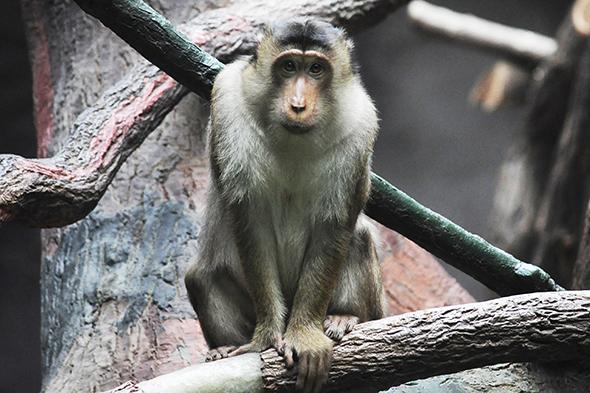 opice zoo praha