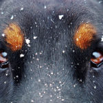 Jak vidí pes?