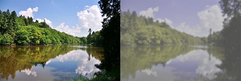 Přibližný obrázek toho, jak psi vidí svět ve srovnání s člověkem. Kredit: © Redakce ZOO Magazín, fotografie napravo upravena pomocí webové aplikace Dog Vision